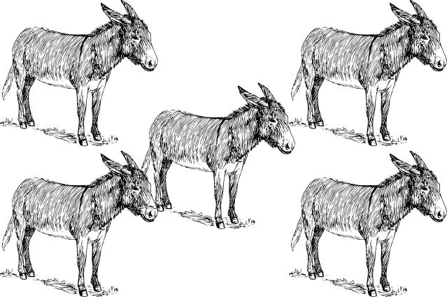 5 donkeys