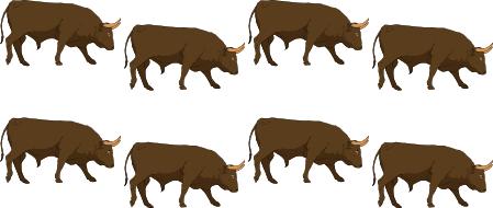 8 bulls